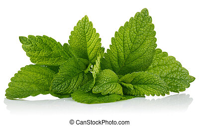 Fresh leaf mint green herbs ingredient for mojito drink, ...