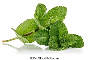 Fresh leaf mint green herbs ingredient. - Fresh leaf mint ...