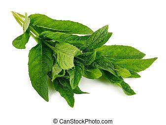 Fresh leaf mint green herbs ingredient - Fresh leaf mint ...