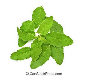 Fresh leaf of basil on a white background