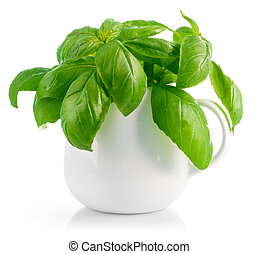 Fresh leaves basil in white vase. Isolated on white ...