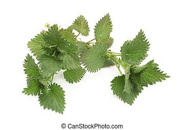 Fresh leaves of nettle