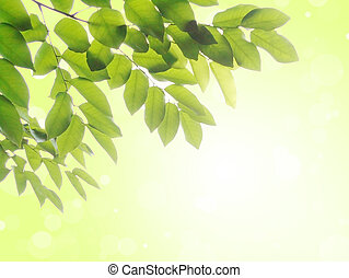 Fresh leaves on green background