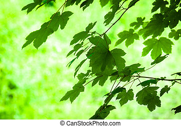 Fresh leaves with blurry background
