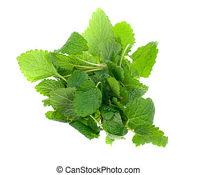 fresh lemon balm herb isolated on white background