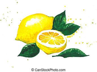 Fresh lemon fruit.