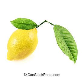 Fresh lemon fruit isolated