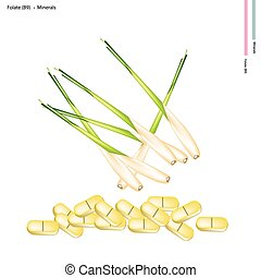 Fresh Lemon Grass with Vitamin B9 and Minerals