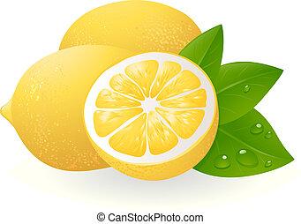 Fresh lemons with leaves. Realistic vector illustration
