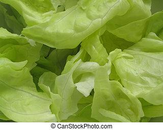 fresh lettuce #2