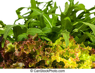 Fresh lettuce and rucola isolated on white. Background close up.