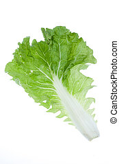 Fresh lettuce isolated on white