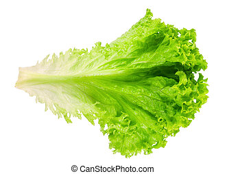 Fresh lettuce isolated on white top view
