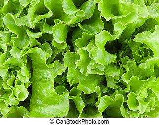 fresh lettuce leaves closeup