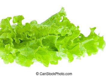 Fresh lettuce on white background. Isolated.