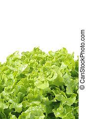 Fresh lettuce on white background