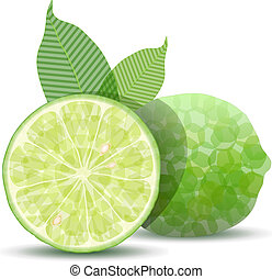 Fresh Lime - Stylized fresh vector lime isolated on white