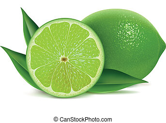 Fresh limes - Vector illustration of fresh limes