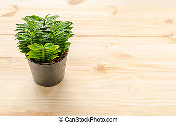 Fresh little tree on the wooden background in House