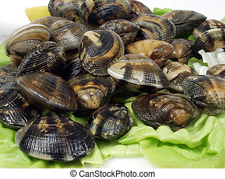 clam - fresh live clams over lettuce leaves on a market