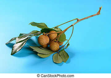fresh longan with leaves on a blue background