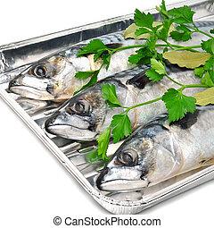 Fresh mackerel fish with parsley on the aluminium foil tray