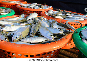 fresh mackerel fishes in the plastic basket for sale