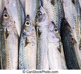 fresh mackerels 2
