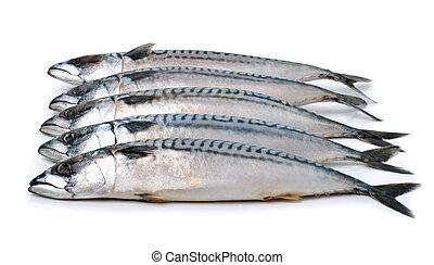 mackerels isolated on white
