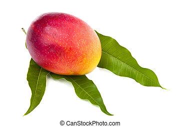 fresh mango fruit with cut and real mango leafs