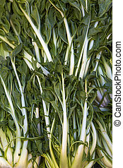 Fresh mangold on the market