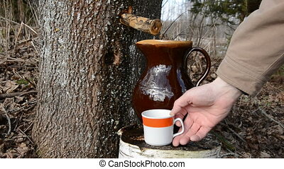 fresh maple sap pour in cup - sweet and fresh maple sap pour...