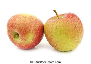 fresh Maribelle apples