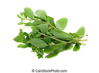 fresh marjoram herb isolated on a white background