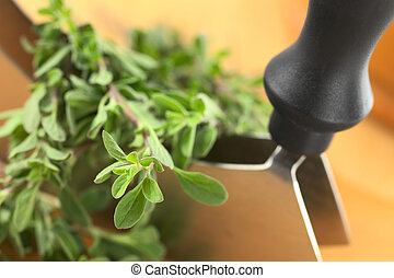 Fresh marjoram twigs with mezzaluna on cutting board (Selective Focus, Focus on the plant in the left lower corner)