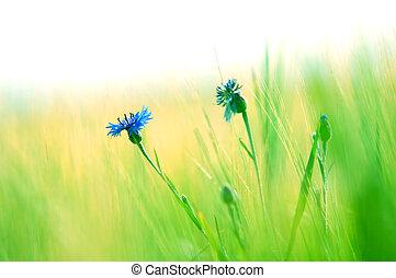 Fresh meadow background