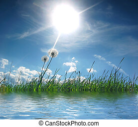 Fresh meadow background - Fresh sunny meadow with dandelions