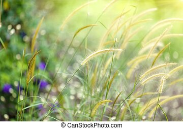 fresh meadow background