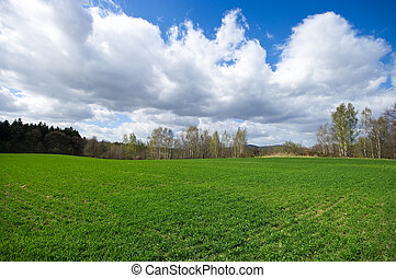 Fresh meadow during the spring