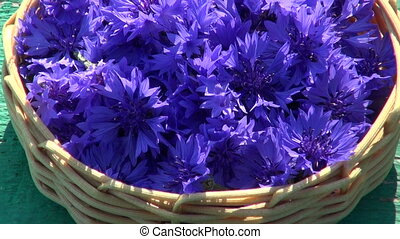 fresh medical cornflower blossoms