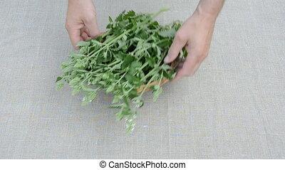 fresh medical lemon-balm herbs