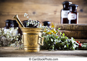 Fresh medicinal herbs on wooden desk