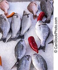 fresh mediterranean fish 2