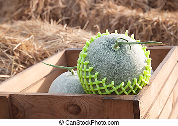 Fresh melons in wooden box on straw. Healthy fruit