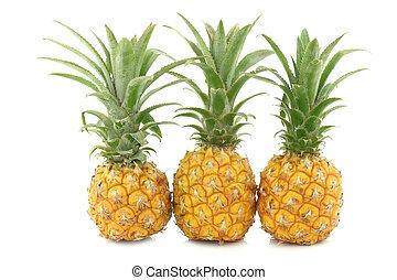 fresh mini pineapple fruit