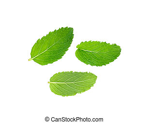 Fresh mint isolated on the white background