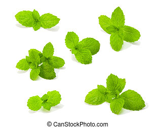 fresh mint isolated on white spearmint