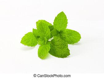 fresh mint isolated on white