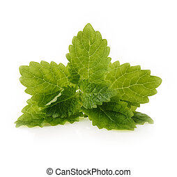 Fresh mint leaf on white background.