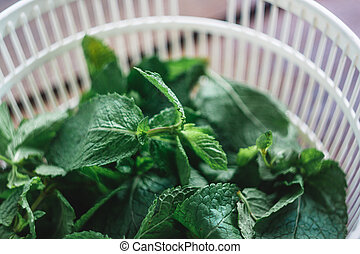 Fresh mint leaves in the dryer for greens.